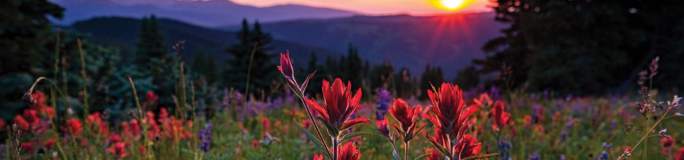 Field of wildflowers near lake tahoe