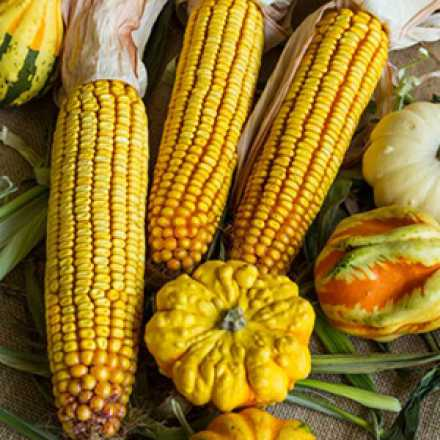 corn and gourds
