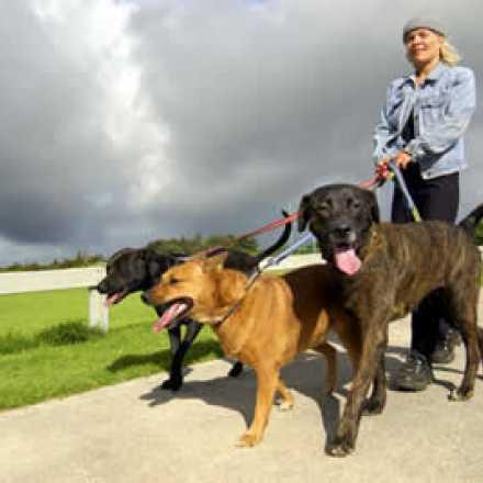 Woman walking 3 dogs