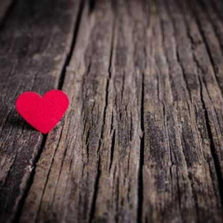 Red heart on tree bark