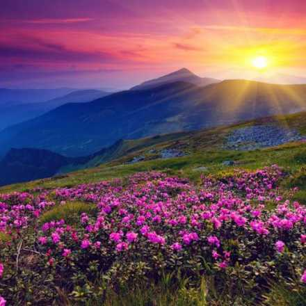 Colorful Sunrise over the mountains and a field of purple flowers