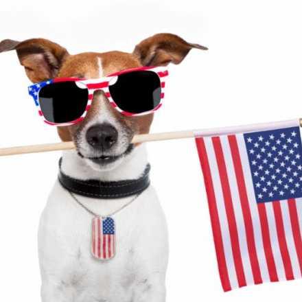 Dog wearing sunglasses holding American Flag