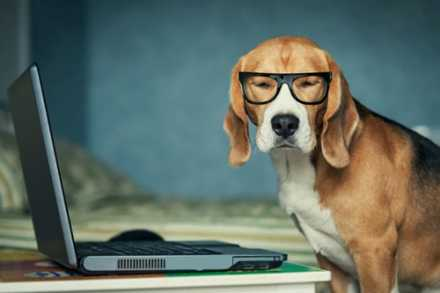 Dog wearing reading glasses sitting at a laptop