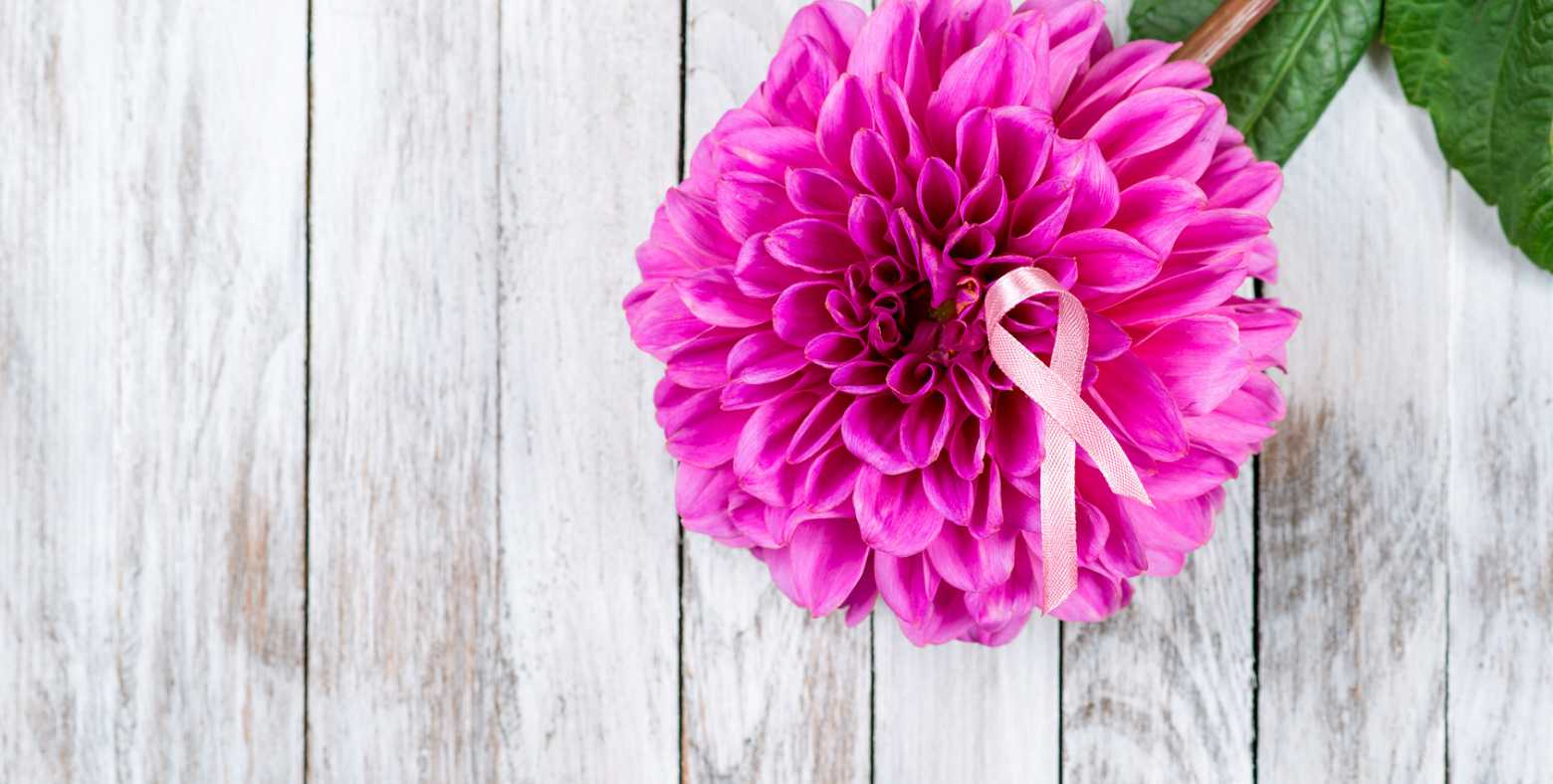pink carnation and ribbon