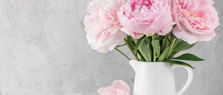 Pink flowers in a white vase